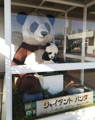 【おもしろオブジェ No.0039】ちょっとぐずり気味な子パンダ
